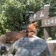 六甲山記念碑台の石の上