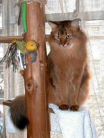 手作り猫タワーは吉野杉